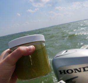 Algae samples in Lake Erie, Courtesy of Cleveland Water Alliance