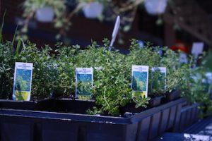 6 Ways to be Environmentally Conscious During Quarantine 1