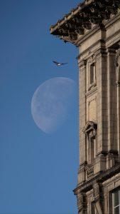 FLYING HAWK AND MOON; STEPHEN MCGEE