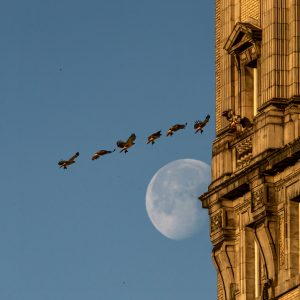 HAWK AND MOON FLYING PHASES; STEPHEN MCGEE