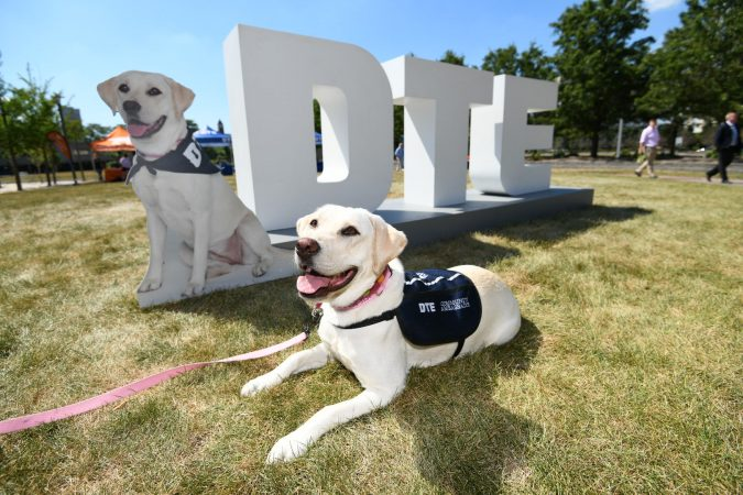 NORA THE DTE DOG. PHOTO PROVIDED BY DTE